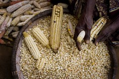 Africa Food Security 12 (DFAT photo library) Tags: africa unicef corn women malawi maize mlw lilongwe foodsecurity publiccontent malawe chimtekechildsupportcentre socialcashtransferscheme