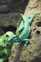 Green Lizard (Colin Hodges) Tags: 2 geotagged 51 2747635558 3719350128