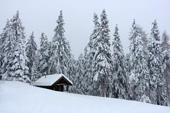 Winter am Rosskopf bei Sterzing (mikiitaly) Tags: schnee italy snow day htte wald sdtirol altoadige wipptal rosskopf eisacktal bestcapturesaoi elementssterzing