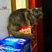 Liquor Store Cat Likes Tecate Best, Snubs Bud Light