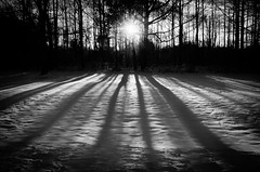 Winter Shadows (PIPA Fine Art - Nature and Landscape Photography) Tags: wood trees winter sunset blackandwhite sun white snow cold tree ice nature beauty field weather silhouette rural forest sunrise season landscape outdoors countryside frozen scenery frost day view natural outdoor snowy background seasonal scenic frosty scene sunrays lowkey tranquil winterweather glowingsun nonurban winterseason lowkeyphotography blackandwhitelandscapephotograph bestcapturesaoi elitegalleryaoi mygearandme mygearandmepremium mygearandmebronze mygearandmesilver blinkagain flickrbronzetrophygroup ruby10 photographyforrecreationeliteclub ruby15 blinksuperstars flickrstruereflection1 flickrsfinestimages1 l3pfrbwclassic