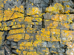 breaks in the lichen coated rock (gerrygoal2008) Tags: nature rock horizontal rocks earth coat fault layers lichen geology ardoise breaks lignes linear feuille millefeuille britany rupture geologic strates strains schiste failles concordians blinkagain