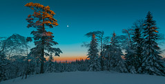 Turquoise Dusk (Tore Thiis Fjeld) Tags: trees winter light sunset moon snow color nature oslo norway forest solitude dusk turquoise samsung tranquility silence serenity afterglow lillomarka nx210