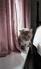 (soulshine59) Tags: cats canon5d niksoftware photoshopelements9