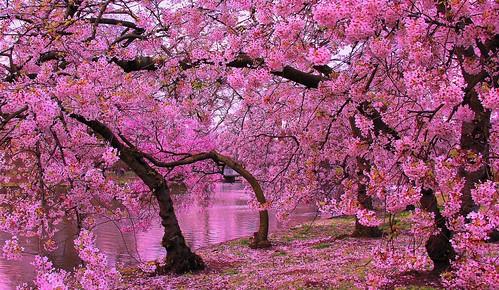Springtime in St James' Park por Patrizia Ilaria Sechi