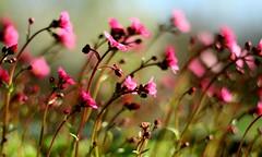 Le public du Dieu R (Et si, et si ...) Tags: fleurs bokeh couleurs printemps allerverslalumire ferveurflorale
