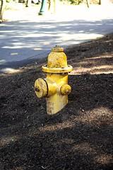 SDIM0007 (pikturetkr) Tags: oregon hydrant sigma testing merrill sdp3m