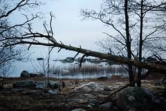 (Sameli) Tags: trees sea tree nature water suomi finland landscape still helsinki silent shore hush