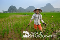 Smiling Rice Farmer in Front of Limestone Mountains (Altai World Photography) Tags: woman mountain mountains field hat asia rice south north east vietnam limestone farmer southeast karst tam bing conical coc paddies ninh tamcoc vnm ninhbing kartsts