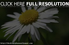 Flower Flowers Wallpapers 2014 (Sadia Komal) Tags: flower macro canon petals spring mood daisy deepoffield theunforgettablepictures macromarvels vosplusbellesphotos