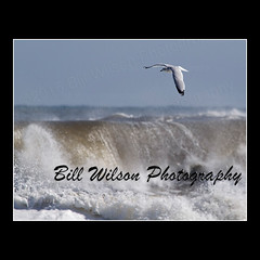 Gull Turbulent Seas (wildlifephotonj) Tags: ocean seagulls bird beach nature birds wildlife seagull gull gulls beachbirds naturephotography naturephotos wildlifephotography wildlifephotos beachphotos natureprints wildlifephotographynj naturephotographynj beachesnewjersey