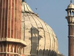 The 13th Way of Looking at San Marco (Mayank Austen Soofi) Tags: delhi walla the 13th way looking san marco jama masjid mosque