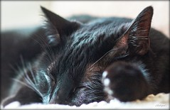 The catnap. © ® (The Sergeant AGS (A city guy)) Tags: cat experiment macro black indoor