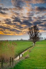 Sunrise 2 (© Jenco van Zalk) Tags: water field spring tree reed clouds rural nature farmland sunrise netherlands holland jenco meadow light cloudscape portrait