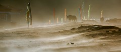 EP1A3772 (Andrew Bee 1dx) Tags: 海拔3700米 甘孜藏族自治州 尘土飞扬 康定县 四川省 中华人民共和国 藏式民居 川西高原 意境 画意 塔公草原 户外 经幡 牦牛 高原 光影 亚洲 色彩