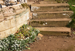 Snowdrops and steps (phillipbonsai) Tags: benington snowdrops aconite