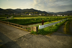 A peaceful day. (Yasuyuki Oomagari) Tags: flower bridge countryside peace light sunset evening nikon d810 zeiss carlzeiss spring river green composition