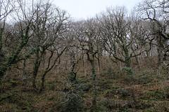 2JAC3250_exmoor_170313 (_husky_) Tags: devon exmoor exmoornationalpark fuji1655 fujixt1 nationaltrust somerset watersmeet