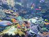 00734922 Aquarium Berlin 1 - 2017 (golli43) Tags: aquariumberlin zoo fische krokodile quallen wasser wasserpflanzen amphibien insekten unterwasserwelt
