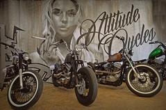Bad Attitude... (Harleynik Rides Again.) Tags: badattitude bobber hd harleydavidson sportster attitudecustoms biker motorcycles bikes motos nikondf harleynikridesagain allrightsreserved