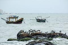 morning meeting... (@petra) Tags: petra summertime 2008 ocean seascape boats seagulls memories nikon