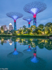 Singapore / Gardens by the Bay - Super Tress in Silver Garden (patuffel) Tags: singapore gardens by bay super tress silver garden singapur