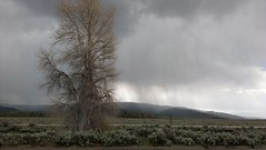 Storm Inside Grand Teton NP (sprout2008) Tags: yellowstone tetons