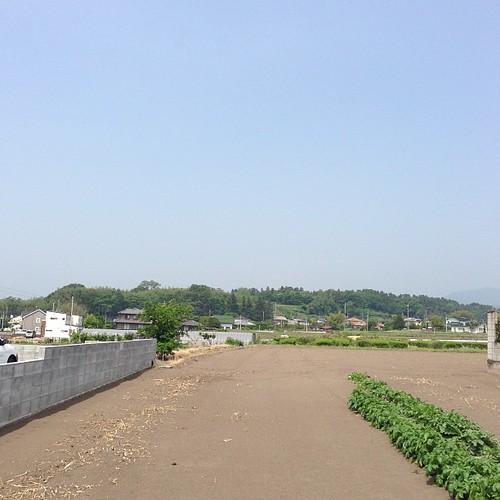 上州箕輪城。東から望む。