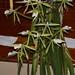 Epi. parkinsonium – Judy Dyer
