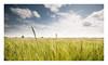Summer Time (A-D-Jones) Tags: blue mill field st yellow clouds carr angle dam farm wheat wide crop fields helens depth wigan billinge garswood of