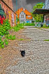 DSC_9344_HDR (Q. Meloen) Tags: graffiti belgium belgie extreme blackbird deadbird hdr antwerpen dood merel doel uitgestorven