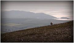 A walk up Sartfell (peddyrmac) Tags: mountain man landscape fire scenery hare sheep forestry hill hills erosion peat footpath isle isleofman manx greenway conifer daff uplands prow snaefell sphagnum defa sulby hillland sartfell