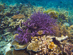 Great Barrier Reef (Photography Perspectiv) Tags: fish coral colours qld reef greatbarrierreef