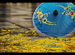 Wat Phrathat Doi Suthep - Chiang Mai, Thailand (Sam Antonio Photography) Tags: wood blue flower color art love floral beauty yellow horizontal architecture umbrella painting paper asian handicraft thailand outside outdoors temple photography pagoda wooden petals artwork ancient colorful asia southeastasia day pattern artistic antique painted religion joy silk culture craft happiness sunny nopeople monastery thai trust chiangmai colourful spirituality conceptual multicolored wat gilded doisuthep brolly frontview selectivefocus tranquilscene placeofworship chiangmaiprovince travelphotography thaiculture traveldestinations colorimage famousplace watphrathatdoisuthep buildingexterior bosang lowangleview borsang chiangmaithailand builtstructure theravadabuddhist canoneos5dmarkii samantoniophotographycom handpaintedsilkumbrellas