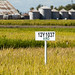 20130830_Rice Experiment Station 0989_online copy