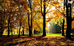 Autumn leaf fall forest trees wallpaper (Infoway LLC - Website Development Company) Tags: wallpaper beautiful wonderful nice superb awesome images exotic hd illustrator incredible breathtaking classy bambooforest mindblowing dryforest amazonrainforest greenforest winterforest woodforest junglewallpaper sunsetwallpaper islandwallpaper summerforest responsivewebsitedesign subtropicalforestwallpaper waterfallintropicalforest responsivewebdesigncompany autumnleaffallforesttreeswallpaper mountainsnowforest yellowredautumnforest tropicaldesertisland tropicalforestwithriver