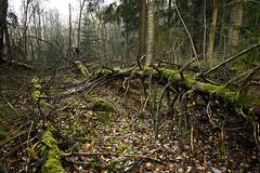 Forest (Roni Rekomaa) Tags: autumn forest espoo suomi finland leaf moss fallen metsä 2013 hannusjärvi