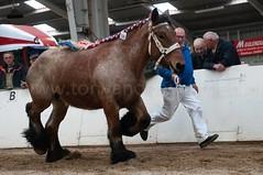 DSC_6600 (Ton van der Weerden) Tags: horses horse dutch de cheval belgian nederlands belges draft chevaux belgisch trait trekpaard trekpaarden ckcentralekeuringsintoedenrodechantaluitdelinde
