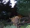 Spirit in Fall (robynlreynolds) Tags: fall angels ghosts orbs spiritphotography acworth spiritguides griefhealing robynlreynolds