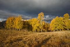 Oxbow Meadow - Tetons (Jackpicks) Tags: meadow wyoming grandtetonsnationalpark oxbowbend