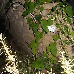 DSCN0654 (old.curmudgeon) Tags: flora texas 5050cy nikoncoolpixs205