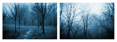 colder again (i k o) Tags: blue trees winter wet monochrome rain fog twilight diptych branches cctv vignetting f25 lensblur manualfocusing cmount sonynex3 fujian35mmf17