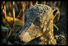 "Early Morning Sun melting frosted Dog! (Diana Thorold.) Tags: art texture psp interesting manipulate flamingpear 2013 artdigital pixlr dianathorold magicunicornverybest ""exoticimage"" netartii"