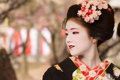 Kitano-Tenmangu Bai-Ka-Sai Kyouto (GGG 3) Tags: history festival japan kyoto tea historic geiko  kimono ume   d800  nodate kitanotenmangu  baikasai jinjya cya geisya        bukkaku   kamisitiken sugawaranomitizane