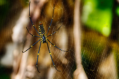 Lucky Spider (Daniel Robert Kelly) Tags: india wayanad kalpetta
