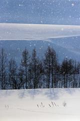 20140223-DSC_7098-Edit (hidetoshikikuchi) Tags: winter snow nature nikon hokkaido  biei
