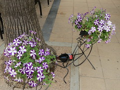 Wine Bike (Jean Bloor) Tags: holiday flower bicycle restaurant wine cala majorca millor