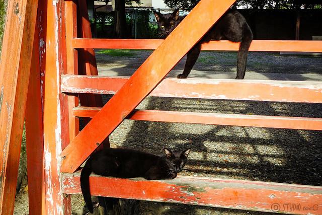 Today's Cat@2015-07-19