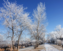 Winter Light (Ruth Voorhis) Tags: trees branches frost hoarfrost sky shrubs trail path outdoors