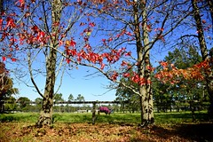 a horse for the autumn (The world is my canvas) Tags: blue autumn trees horses horse fall nature leaves animal fence season caballo nikon farm country nikkor stable thefall horseriding gallop countrydrive wideanglelens horsestable 1424 nikkor1224f28 d800e nikond800e